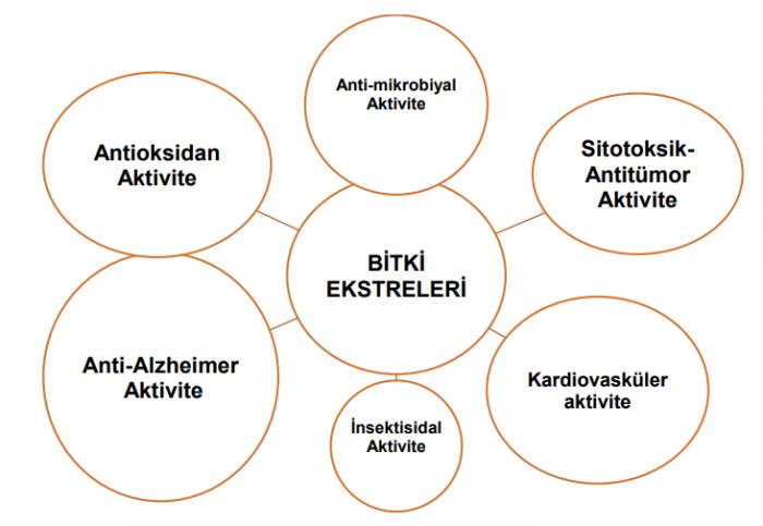 Biyolojik Aktivite şeması.
